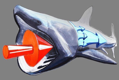 Strait Power Shark illustration